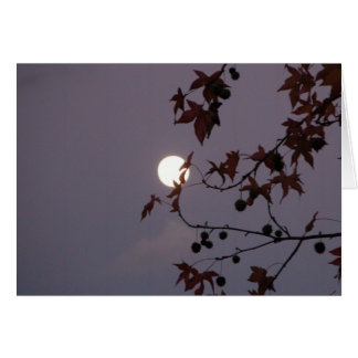 Full Moon behind leafy branch Greeting Card