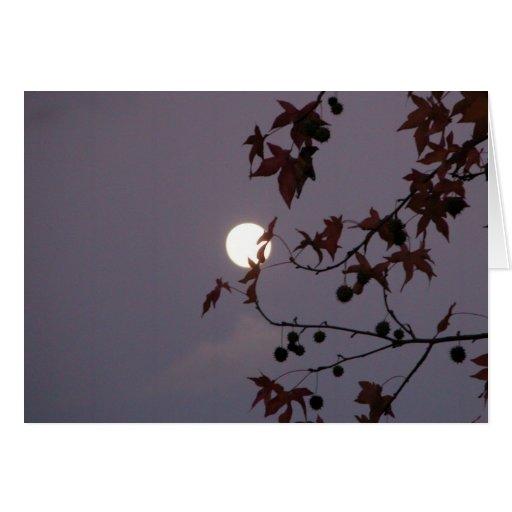 Full Moon behind leafy branch Greeting Card