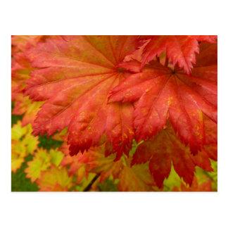 Full Moon Maple Leaves Postcard