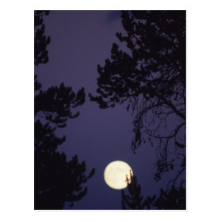 Full Moon Postcard