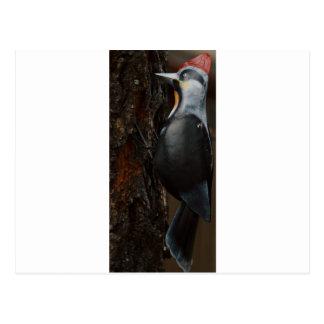 Full SIze Woodpecker Postcard