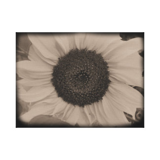 Full Sunflower Face in Diatrope Gallery Wrapped Canvas
