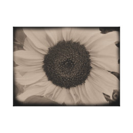 Full Sunflower Face in Diatrope Canvas Print