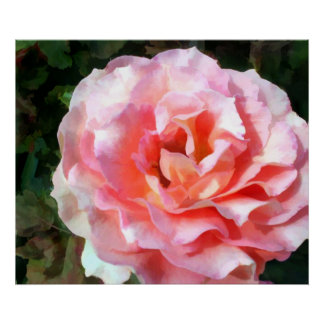 Fully Blooming Pink Rose Poster