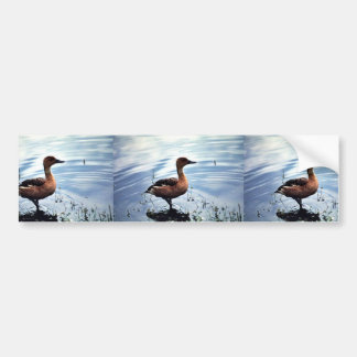 Fulvous Whistling Duck Bumper Stickers