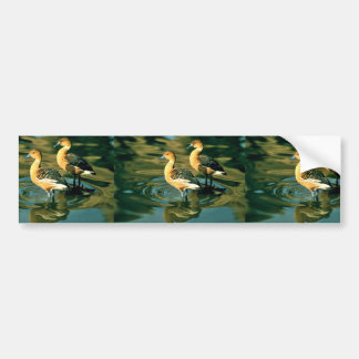 Fulvous Whistling Duck Bumper Sticker
