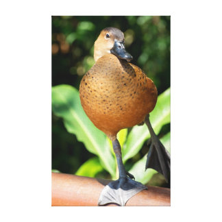 Fulvous Whistling Duck On Rail Canvas Print