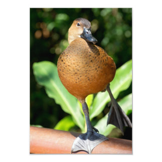 Fulvous Whistling Duck On Rail Card