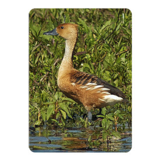 Fulvous Whistling Duck With Long Neck 5x7 Paper Invitation Card