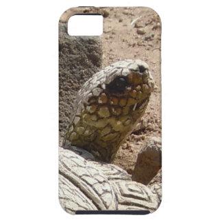 Fun American Southwest Desert Tortoise Herpetology iPhone SE/5/5s Case
