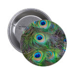 Fun and Cool peacock feather design Pin