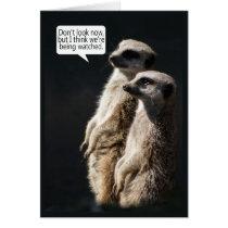Fun Birthday Card With Meerkats - Humour