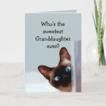 """Fun Granddaughter  Birthday Wishes Siamese Cat Card<br><div class=""""desc"""">Funny Granddaughter Birthday Wishes Siamese Cat Animal Humor you up.   Perfect for that Granddaughter in your life with a sense of humor,  a love of cats and a birthday</div>"""
