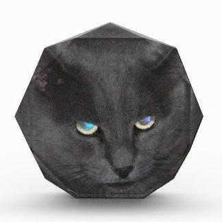 Fun Grey Kitty Cat w/ Colored Eyes Awards