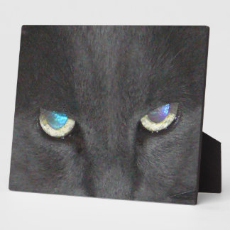 Fun Grey Kitty Cat w/ Colored Eyes Display Plaques