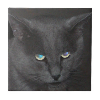 Fun Grey Kitty Cat w/ Colored Eyes Tiles