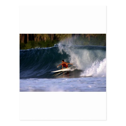 Fun in paradise tropical island surfing wave post cards