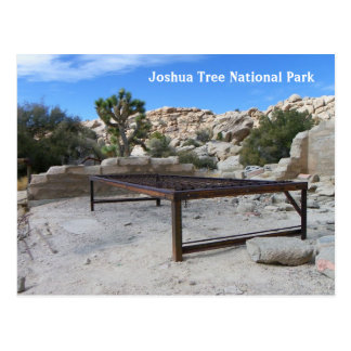 Fun Joshua Tree Postcard! Postcard