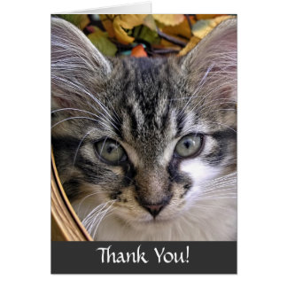 Fun Maine Coon Kitty Cat Kitten, Thank You Note Card