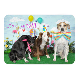 Fun party invitation. Photo of dogs in party hats. Card