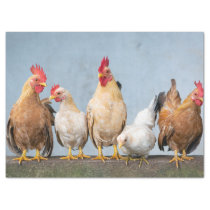 Fun Photo of Chickens & Roosters on Wall Tissue Paper