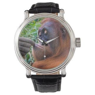 Fun Photo Orangutan Ape Watch