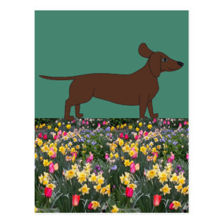 Fun Postcards with Dachshund and Flower Field