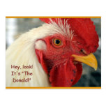 """Fun Rooster Postcard """"Hey, Look! It's The Donald!"""""""