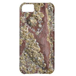 Fun shell, barnacle and limpet iPhone 5C case
