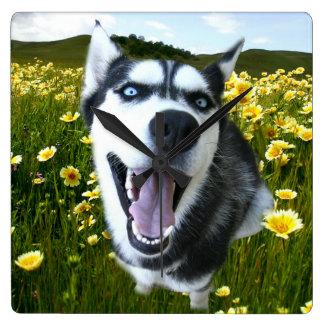 Fun Siberian Husky in the Wildflowers Clock