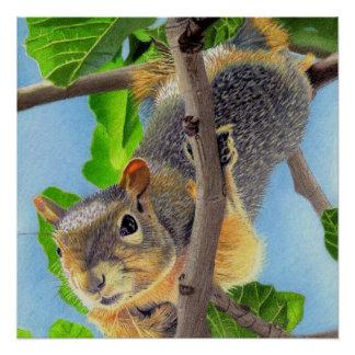 Fun Squirrel in Tree Perfect Poster