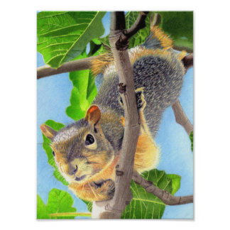 Fun Squirrel in Tree Photo Print