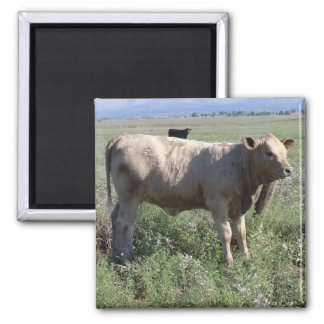 Fun Western Cattle Cute Cow 2 Inch Square Magnet