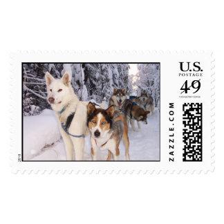 Funcionamiento con los perros grandes sello