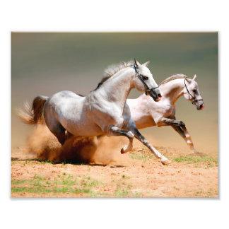 funcionamiento de dos caballos blancos fotografías