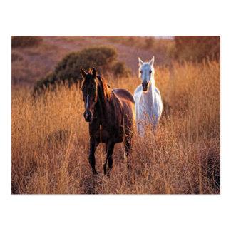Funcionamiento de dos caballos tarjetas postales