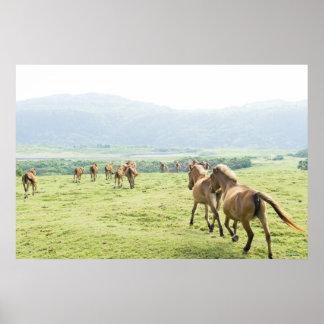 Funcionamiento de los caballos posters