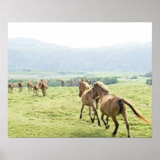 Funcionamiento de los caballos poster