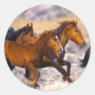 Funcionamiento de los caballos pegatina redonda