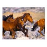 Funcionamiento de los caballos postal