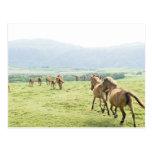 Funcionamiento de los caballos postales