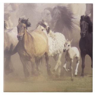Funcionamiento de los caballos salvajes azulejo cuadrado grande
