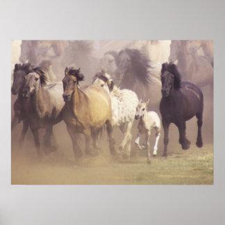 Funcionamiento de los caballos salvajes impresiones