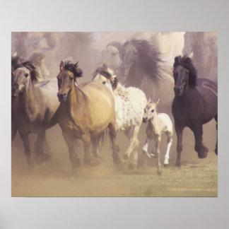 Funcionamiento de los caballos salvajes posters