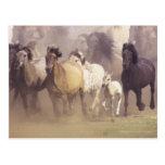Funcionamiento de los caballos salvajes postal