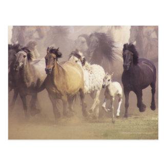 Funcionamiento de los caballos salvajes tarjeta postal