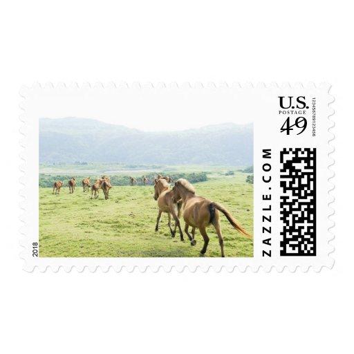 Funcionamiento de los caballos sello