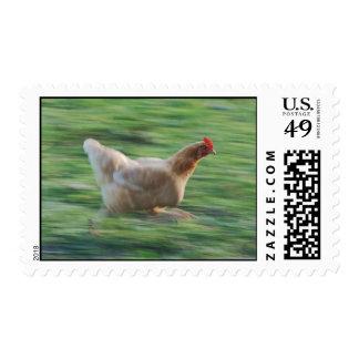 Funcionamiento de pollo timbres postales