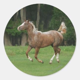 Funcionamiento del caballo del Appaloosa Pegatina Redonda
