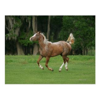 Funcionamiento del caballo del Appaloosa Postales
